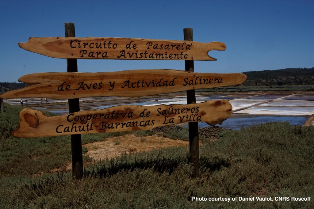 Salinas Cahuil-Barrancas, Chile